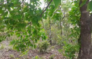 Buxwaha Abhiyan : save the forest