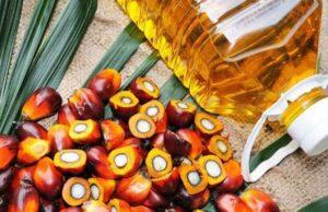 Palm Oil Mission